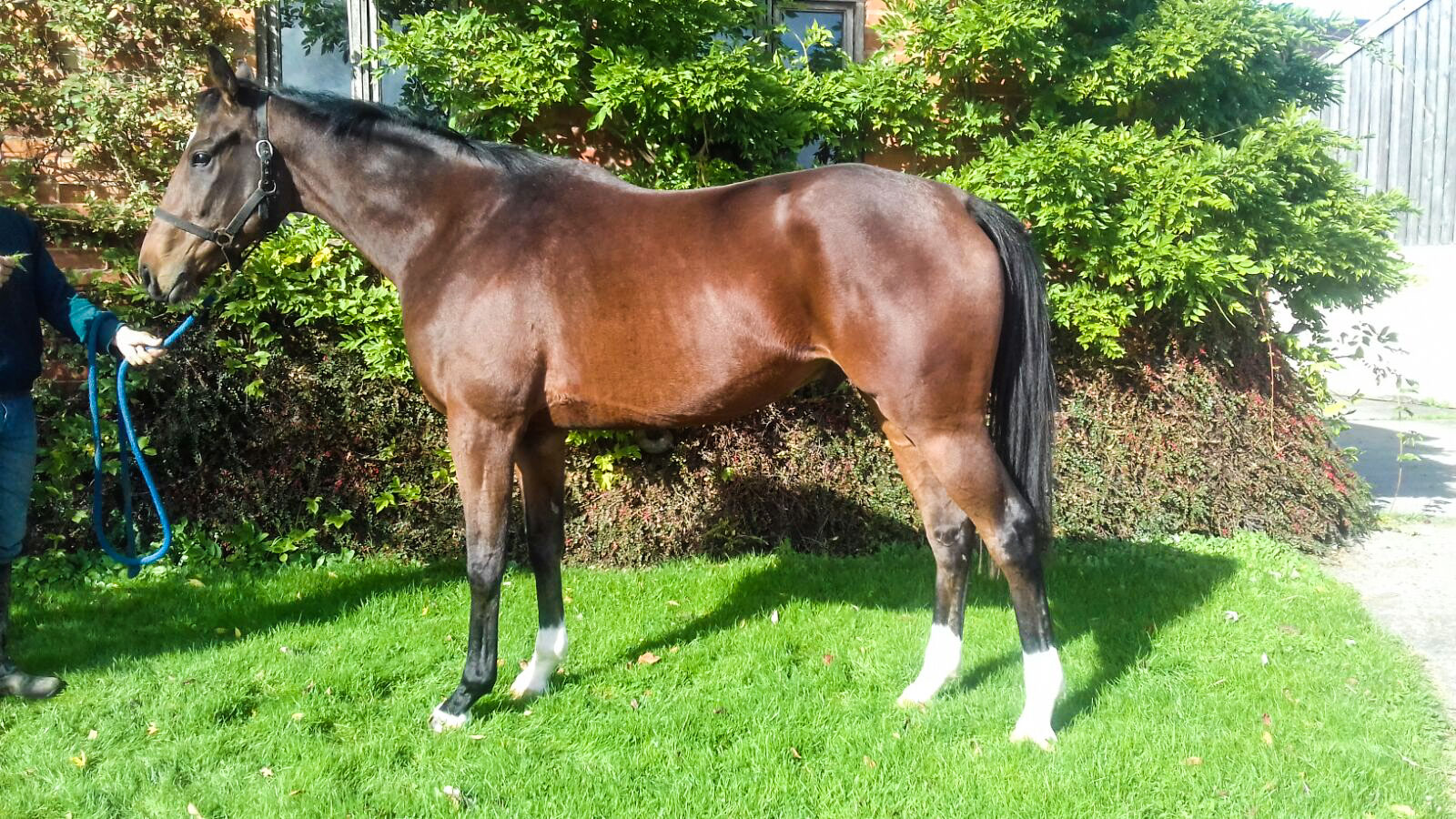 3 year old Gelding by Jeremy, out of Celtic Cailin by Beneficial.